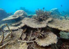 Préservation des océans et des environnements marins