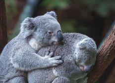 Aidons les animaux d'Australie (Mouscron)