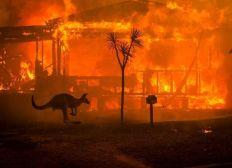 onefinestay - Australian bushfire fundraiser