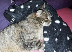 Ein Tierarzt für heimatlose Katzen