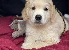 Pasha, une vie de chien pas comme les autres