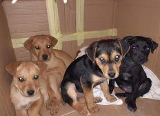 Hilfe für Tierschützer in Zrenjanin, Serbien