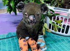 Hilfe für Australiens Wildtiere