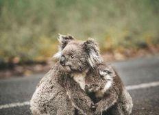 mobilisation pour les soins animaux Australie