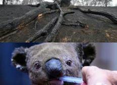 Aide pour la biodiversité en Australie