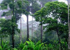 Creation d'aires protégées pour la préservation de la biodiversité en Equateur