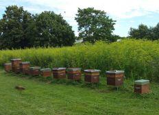 Développement apiculture