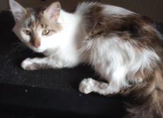 Ein zu Hause für ausgesetzte Katzen....