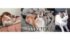 Pour l'avenir de Dakota