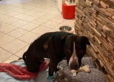 Aide urgente vétérinaire