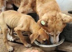 (Besoin Urgent de médicament et nourriture )Sauver les chats et chiens de rue de la mort au Maroc