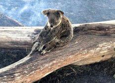 Buschfeuer Australien