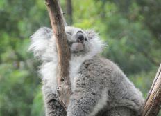 Pour la sauvegarde de la biodiversité en Australie