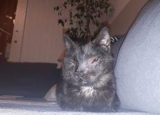 Katze Snotty