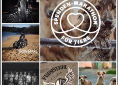 """Fahrstahl für die """"Harten Hunde"""" - Wir bauen ein Custombike für den Tierschutz"""