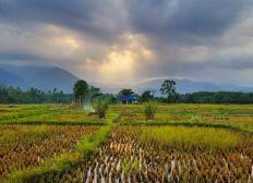 Sumatra Vibes Eco Stay in Bukit Lawang