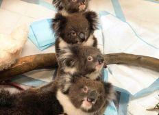 Ich möchte für die fleissigen Helfer und die Tiere in Australien sammeln