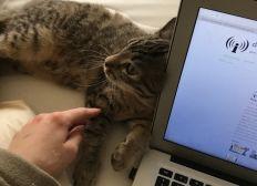 Tierarztrechnung von meinem Kätzchen