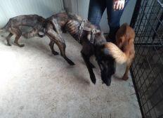 Aidez-nous à soigner sept chiens rescapés in extremis de la maison de l'horreur