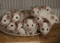 Mäuse-Notfall