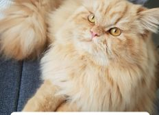 Jungkater Henry wird Katzenkrankheit FIP besiegen