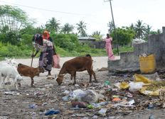 Help the community of Zanzibar  - Environment and community empowerment