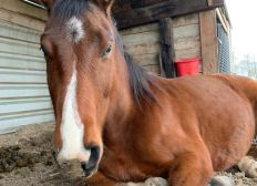 """Für mein Pferd """"Joey"""""""