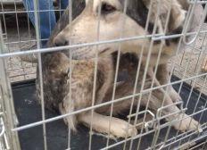 Spenden für unsere rumänischen Hunde