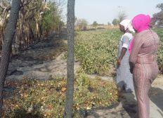 Unterstützung nach Verlust der Ernte in Gambia