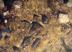 Fallout 76 S Latest Patch Brings Back Old Bugs