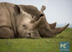 Kenya To Fast-track Laws To Make Wildlife Killing Capital Offence