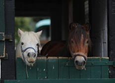 Unterstützung für den Pferde- und Erlebnishof Spiekerhof Borgholzhausen