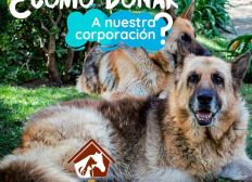 Un anniversaire solidaire pour les chiens en Colombie