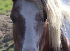 Sauvez nos poneys et chevaux en plein Covid - Soutien à Nathalie, pour la survie du Domaine Equestre des Rioux