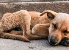 Rettet Hundeherzen Ägypten