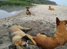 Helfe unseren Hunden in Palomino, Kolumbien