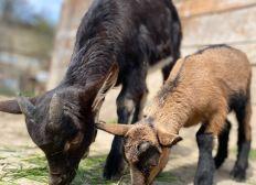 Soutien au Parc Animalier de Lussas