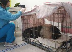 Hospitalización Pinki Winki AYUDA URGENTE