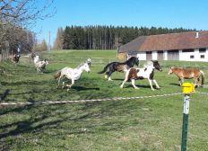Bitte unterstützt den Tinker-Ponyhof während der Covid19 Krise