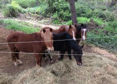 Aidez les chevaux du Club Hippique de Velaux