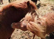 Nos 31 poneys ont besoin de manger !