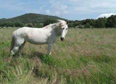 """Les chevaux de """"Caval'en liberté"""" ont besoin de vous !"""