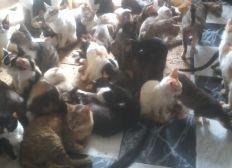 Nourritures pour les chats de mamiche