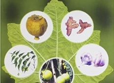 Practical Pharmacognosy By Khandelwal Free Download Pdf