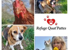Aide au Refuge Quat'Pattes, Zoonat, Nathalie Ollivier
