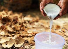 Aider au développement de coco-cosmétiques!
