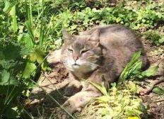 Soins des chats libres de la Bergerie et compagnie