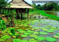 Ayuda para el Amazonas Colombiano