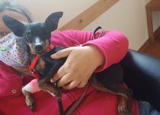 Tierarztkosten Hope