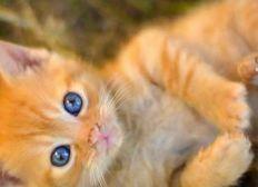 Katzen in Not! Wir wollen helfen!